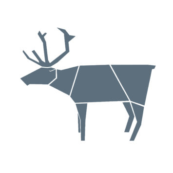 Reindeer and deer